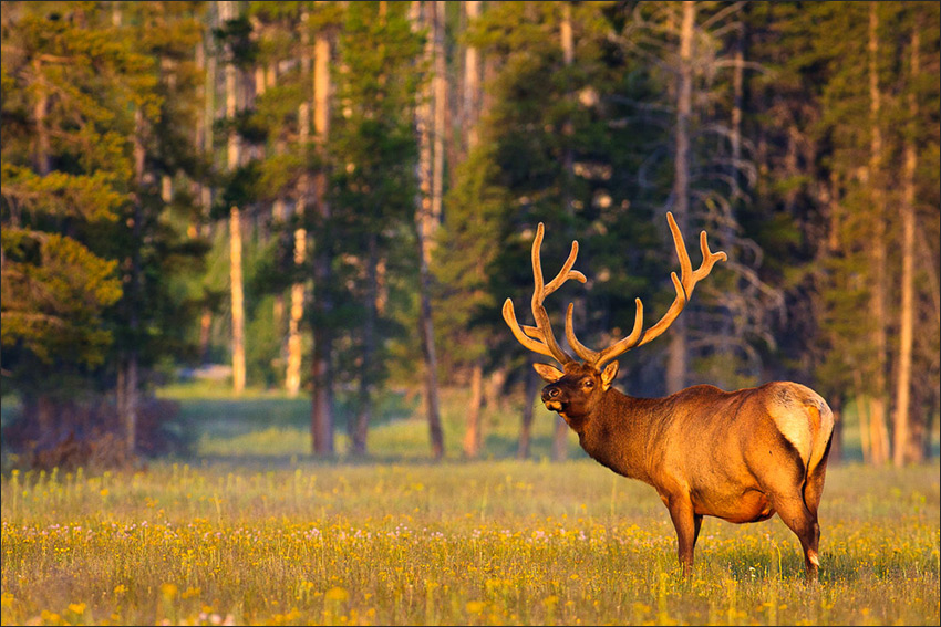 Yellowstone National Park Tour Montana Wyoming Idaho