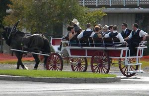 fleet-home-Total-Transportation-Horse-Drawn-Carriage-Wedding-Transportation