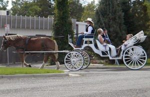 fleet-home-Total-Transportation-Horse-carriage-4-seat