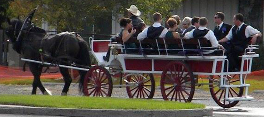Billings Transportation Horse Drawn carriage